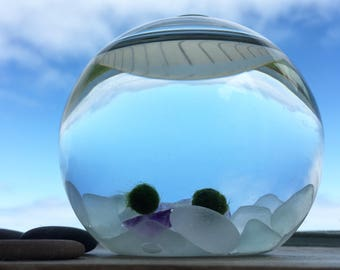 Amethyst & Genuine Sea Glass Marimo Moss Ball Aquarium