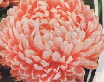 Aster Flower Seeds Yanina (peony) annuals from Ukraine#947