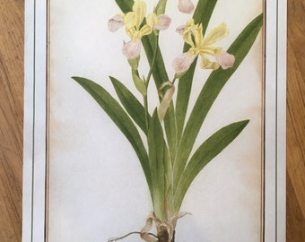Vintage Floral Print