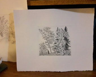 trees etching, woods intaglio print, fur trees print, evergreen trees print, etched leafy trees, summer forest etching, spring park print