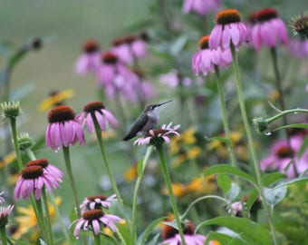 Pollinator Quick Spring Seed Mix