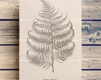 Vintage clip art, Vintage prints, Botanical print, Fern, Botanical art prints, Antique botanical, Instant download print, PNG JPG HQ 300dpi