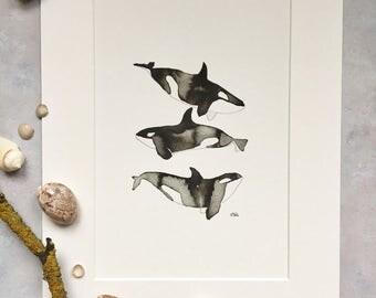 Orca whale - bathroom whale art, orca whale art, nursery whale art - unframed print