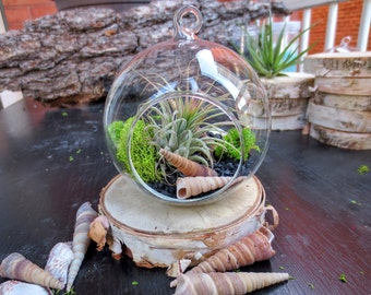 Black Sand Air Plant Terrarium Kit//Hanging glass natural tillandsia kit//DIY moss and air plant terrarium kit