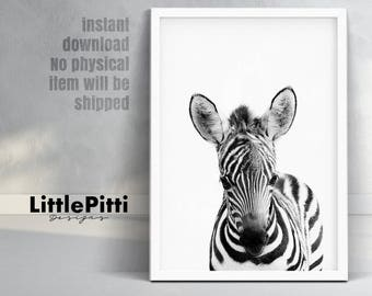 Cute baby zebra, kids room, safari animal print, zebra print, black and white animal print, african animal prints, safari nursery download
