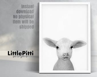 Lamb print, baby sheep wall art, little lamb photo, black white grey wall art, nursery farm animal decor, minimalist art, cute lamb print