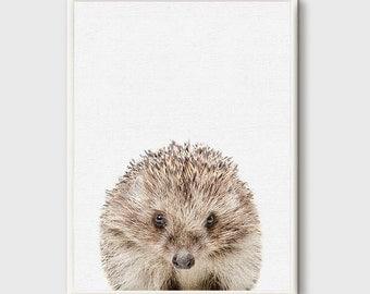 Hedgehog Print, Hedgehog Art, Hedgehog Photo, Animals prints, Photography Art, Animal Wall Art, Nursery Decor, Animal Printable, Photo Art