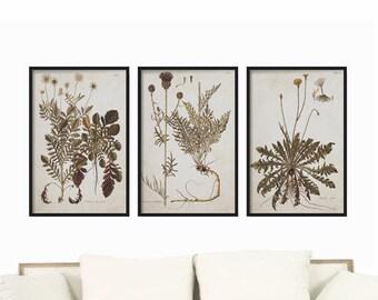 Botanical Prints - Vintage Prints - Illustration -  Prints - Wall Hanging - Kitchen Art - Home Decor - Wall Art Print - Farmhouse Decor