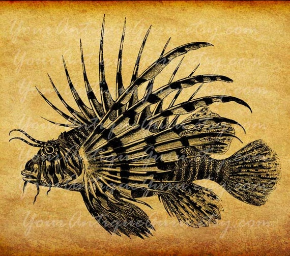Lionfish Clipart Digital Download Instant Download Printable
