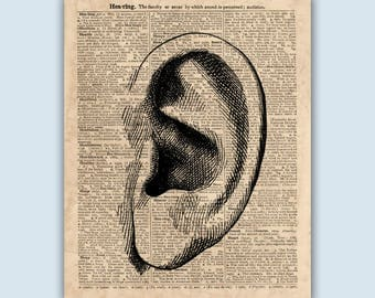 Anatomical Print, Ear Art, Medical Decor, Anatomical Wall Art, Medical Print, Medical Wall Art, Educational Posters