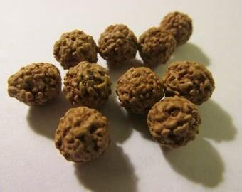 Rudraksha Seed Shiva Tears Mala Beads, 8mm, Set of 10