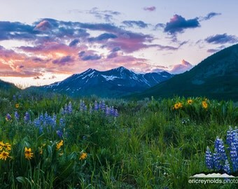 Pink Mountain Sunset and Wildflowers - Crested Butte, Colorado, USA