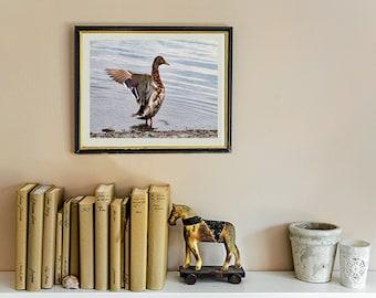 Wildlife Duck Fine Art Photograph, Duck Photograph, Nature Photography, Wanderlust Maine Photograph, Fine Art Print, Wildlife Photography