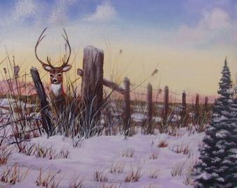 Buck..a winter surprise