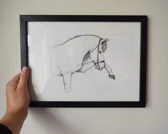 Original A4 pencil study of a horse