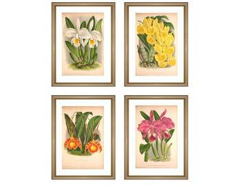 Wall art print Orchid set flowers print vintage art botanical print kitchen decor flowers printable flowers gallery white yellow SET of 4