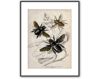 Bee Keeper Antique Bee Print Honey Bee Apis Natural History Colored Entomology Bee Engraving Apiarist Nature Study Wall Art Decor ar 201