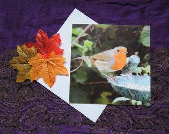 Greetings Card - Blank. Garden birds: The Robin Photograph