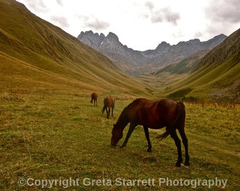 Horses in the Mountains, Republic of Georgia, Color
