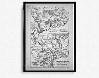 Haeckel Evolution Print, Vertebrate Tree Of Life, Evolution, Paleontology, Evolutionary process, Geology Student Gift, Science print *23*