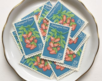 5 Unused vintage postage stamps // Endangered Flora - Hawaiian Wild Broadbean // 1979 // 15 cent