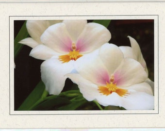 White Miltonia Orchid Blank Note Card