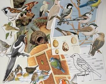 Birds Paper Ephemera Bundle. Robins, Blue Tits, etc, paper collage pack for scrapbooking