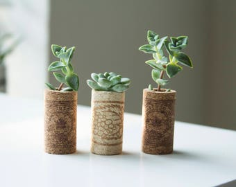 3 Cork Succulent Magnets