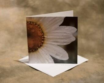 Blank Daisy Cards