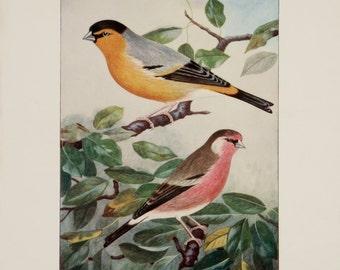 A3 Bird Print Wall Art - Handsome Hybrids (Print #9)