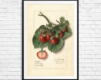 Strawberry print, strawberries, strawberry gift, strawberry art, fruit art print, strawberry botanical, strawberry flavor, strawberry prints