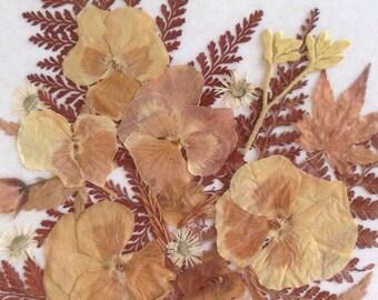 Pressed framed floral  arrangement