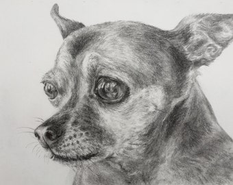 original charcoal portrait-chihuahua