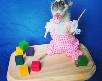 Taxidermy rat/anthropomorphic/baby