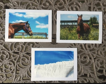 Equine Photo Cars