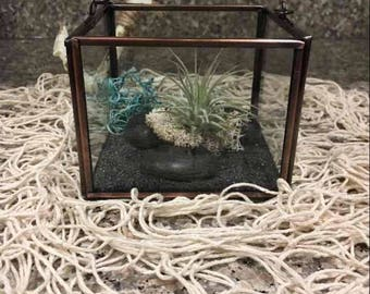 live air plant glass geometric terrarium