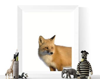 Woodland Animal Printables | Fox Photograph Printable |  Colour Photograph | Woodland Animal Art | Foxes | Woodland Animals