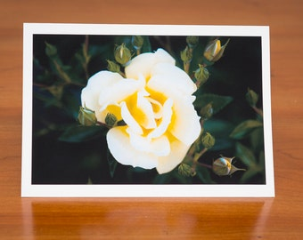White Rose: flower photo greeting card