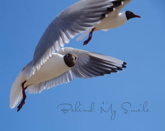 Instant Download Nature Photography, Seagull Photo, Wildlife Photography, Nature Print, Wildlife Art, Bird Photograpy, Beach, Nordic Photo