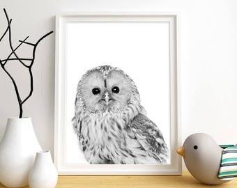 Owl Print, Owl Wall Art, Woodland Animal Wall Art, Baby Animal Print, Instant Digital Download, Black & White Wall Art, Bird Wall Art Print