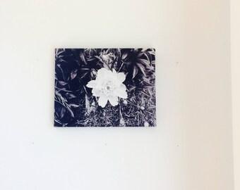 White Flower- Canvas