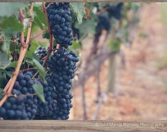 Grapes at Vineyard Photo, Printable Wall Art, Printable Photo, Nature Photography, Instant Digital Download, JPEG File, 5x7, 8x10, 11x14