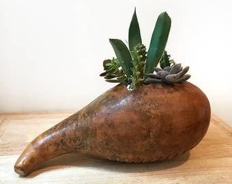 Dried Gourd