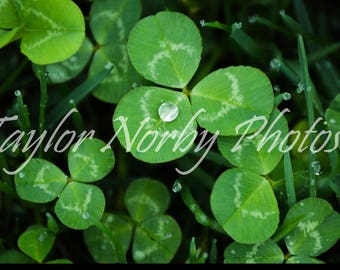 Water Droplet on Clover