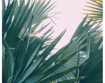 Nature Photograph- Palm Tree Print - Tropical Art - Palm Art - The One With The Light - Fine Art Print- California Print - Florida Art Print