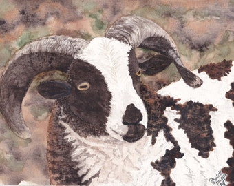 Jacob's Sheep greeting cards-6 w/envelopes-Original watercolor painting