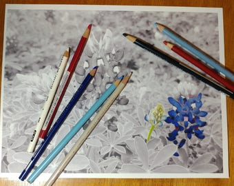 Texas Bluebonnet Greyscale Coloring Page with Tutorial