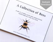 School Room Art - A Collection of Bees - Home School Printable, Montessori, Educational Wall Art, Bees, Insects, Nature Study