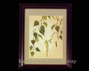 60s Botanical Plate Silver Birch Betula Pendula Catkins Leaves Leaf Print Framed Art Flowering Branch