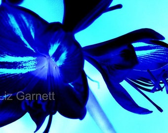 SALE - Contemporary Limited edition photograph of Blue Lily (UK618/21 - 3/45) mounted - reduced for studio clearance